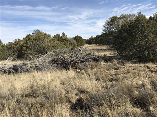3.689 Acres Adjacent to National : White Oaks : Lincoln County : New Mexico