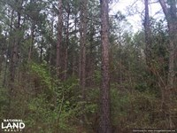 Duck Hill Timber Investment : Duck Hill : Montgomery County : Mississippi