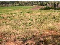 Farm & Recreation Land : Woodland : Randolph County : Alabama