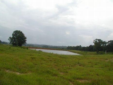 279.9 Acres, Pasture Land : Clio : Barbour County : Alabama