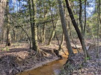 The Upper McInnis Creek Tract : Ariton : Dale County : Alabama