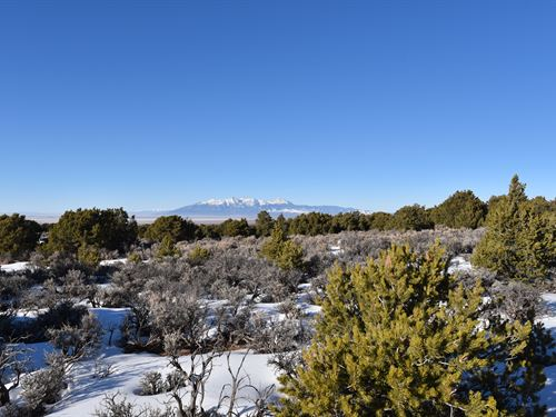Trees And A Mountain View, Oh Yeah : San Luis : Costilla County : Colorado