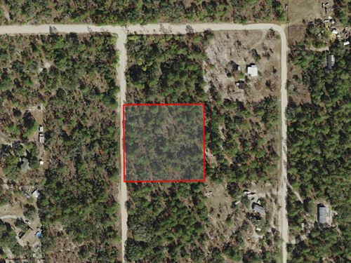 Secluded Mini-Farm : Dunnellon : Citrus County : Florida