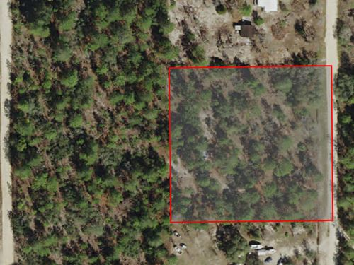 Secluded Mini-Farm Zoned Rural : Dunnellon : Citrus County : Florida