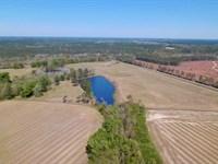Aged Farm Plantation In Denton Ga : Denton : Jeff Davis County : Georgia