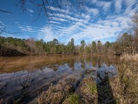 Cattle Farm With Pond : Blanch : Caswell County : North Carolina