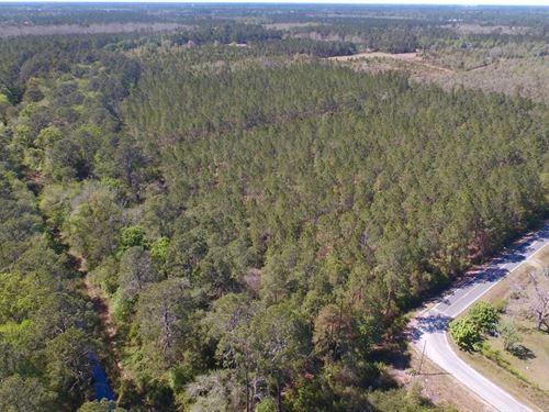 33 Acre Timber Tract in Ware County : Waycross : Ware County : Georgia