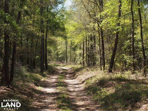 Northwest Florida Hunting Land : Westville : Walton County : Florida