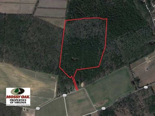 42 Acres of Hunting And Timber Lan : Painter : Accomack County : Virginia