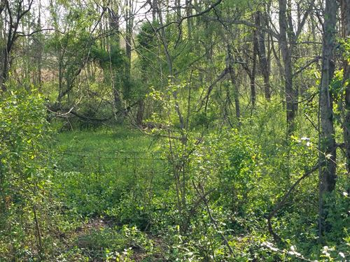 Nice Wooded Building Lot Franklin : Franklin : Simpson County : Kentucky