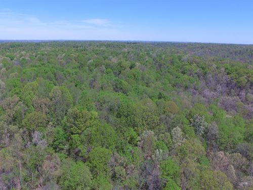 25 Acre Hunting Tract, Timber : Liberty : Casey County : Kentucky
