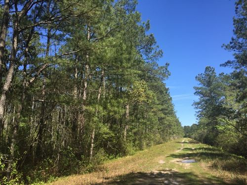 Ventures Lane Tract : Trenton : Jones County : North Carolina