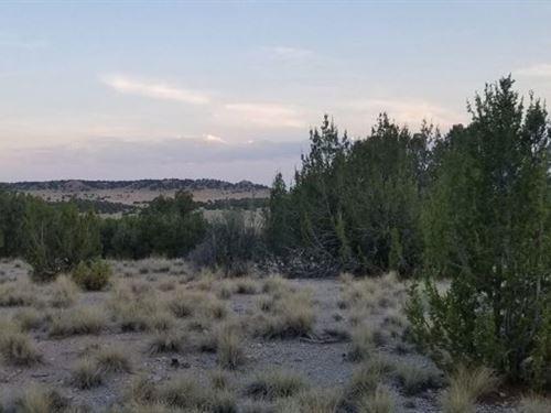 40 Acre Hunters Paradise : La Junta : Las Animas County : Colorado