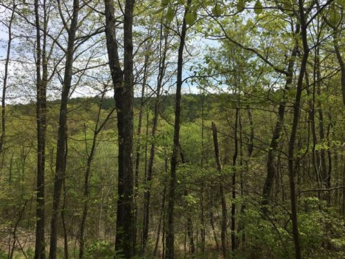 5.5+/- Acres Nice Wooded Tract : South Pittsburg : Marion County : Tennessee