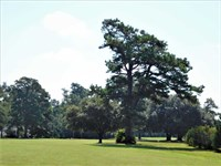 176 Acre Golf Course / Develop : Manning : Clarendon County : South Carolina