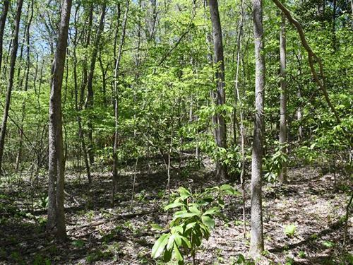 66.97 Acres Timberland on Crowley : Helena : Phillips County : Arkansas