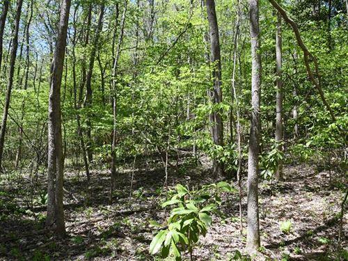 66.97 Acres Timberland on Crowley : Helena : Phillips County : Arkansas