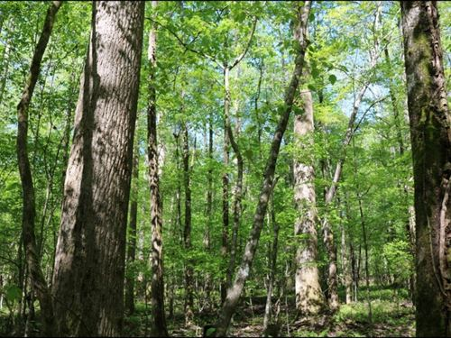 23.68 Acres In Winston County In Lo : Louisville : Winston County : Mississippi