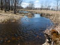 Elk, Deer Land, .Let's Go Huntin : Lake : Isabella County : Michigan