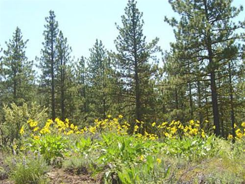 California Pines, Modoc County, Ca : Modoc : California