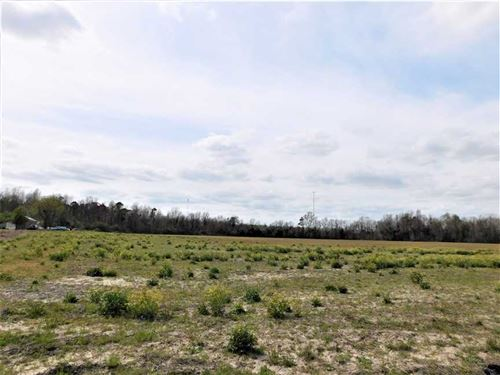 Beautiful 170 Acre Farm Suitabl : Alcolu : Clarendon County : South Carolina