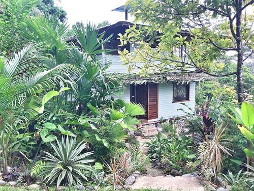 Bluff Beach Area Beautiful Jungle : Bocas Del Toro : Panama