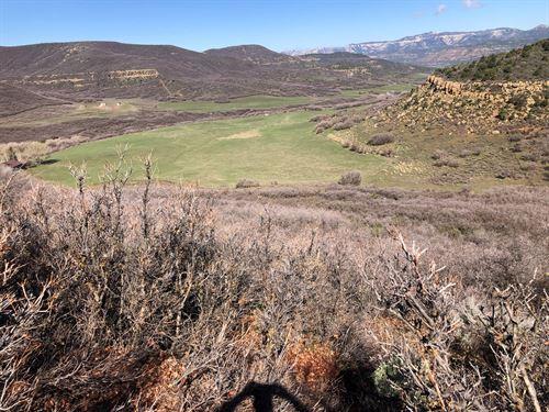Colorado Mountain Hunting Cattle : Collbran : Mesa County : Colorado