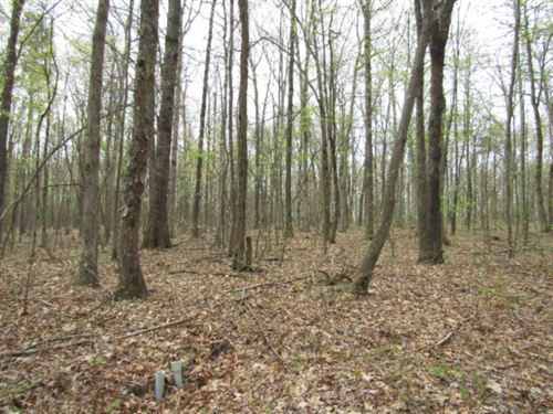 37+ Ac Totally Wooded, Mostly Level : Crawford : Overton County : Tennessee
