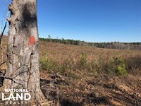 Deer Hunting Property : Ethel : Attala County : Mississippi