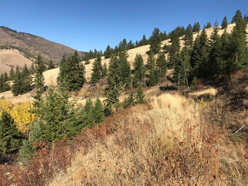 Hunting Property For Sale : Paradise : Sanders County : Montana