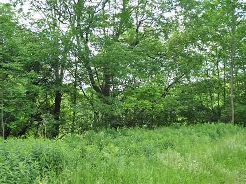 Madison County Wooded Lot : Madison : New York