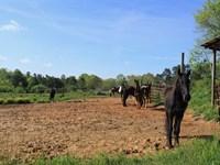 174 Acres in Woodleaf, Rowan CO : Woodleaf : Rowan County : North Carolina