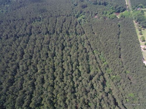 108.8 Ac, Timberland With Home Sit : Doucette : Tyler County : Texas