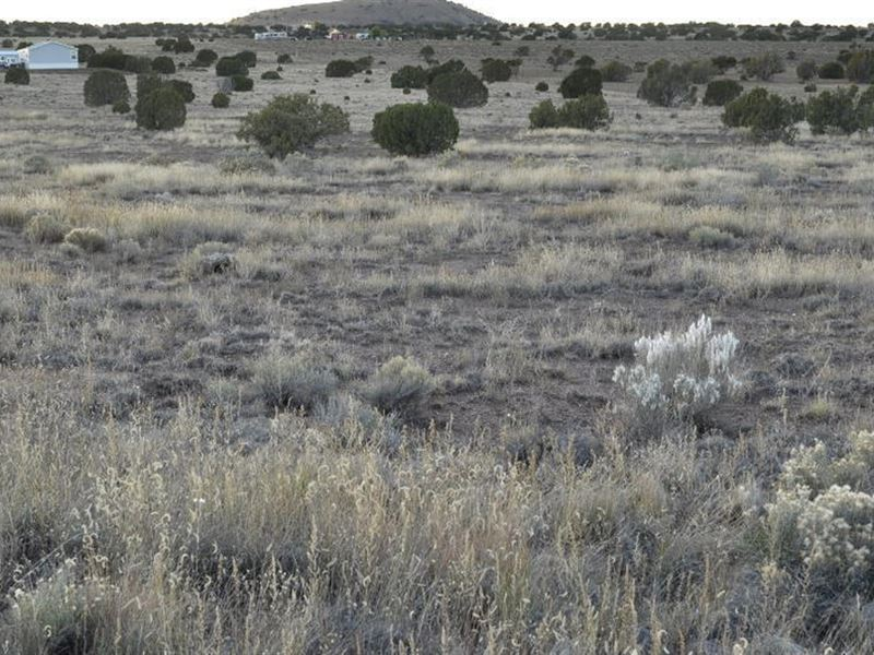 Beautiful Pristine Acreage : Concho : Apache County : Arizona