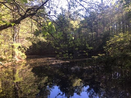 Great Timber & Hunting Tract : Meadville : Franklin County : Mississippi