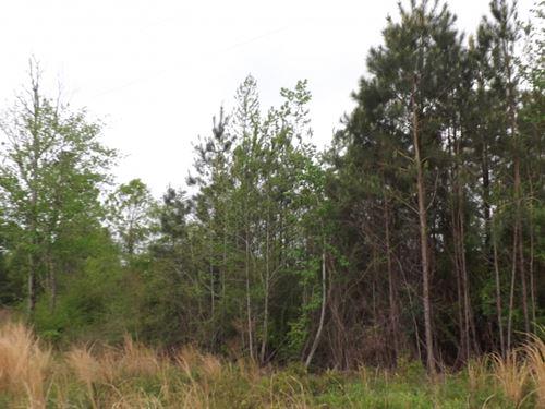 25 Acres In Jefferson Davis County : Oak Vale : Jefferson Davis County : Mississippi
