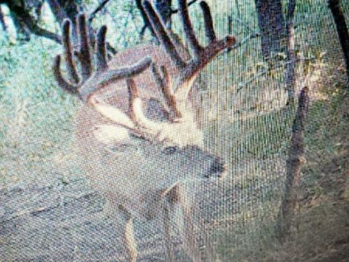 Taylor Co, IA Hunting Land For Sale : Bedford : Taylor County : Iowa