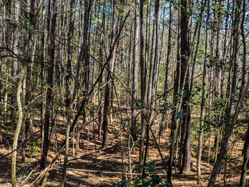29+/- Acre Recreational Parcel : Woodruff : Spartanburg County : South Carolina