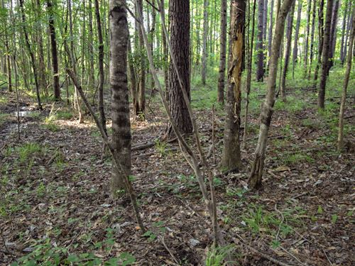 Unrestricted Timberland Near Town : Clanton : Chilton County : Alabama