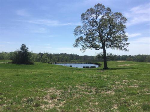 Sevier County AR Ranch Hunting : Horatio : Sevier County : Arkansas
