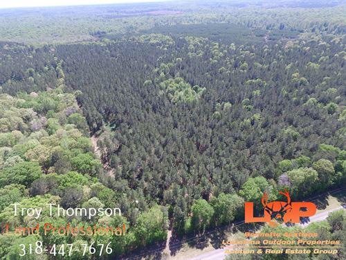 60 Acres Timber And Hunting : Grayson : Caldwell Parish : Louisiana