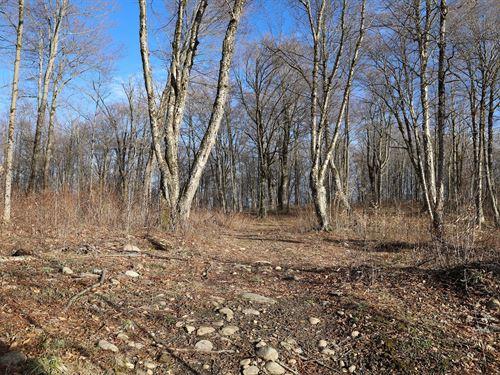 Recreational Possibilities In Woods : Remsen : Oneida County : New York