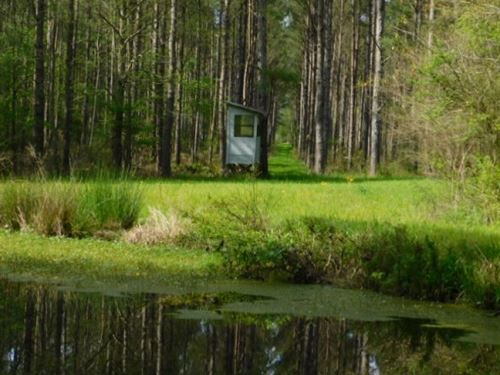 128 Acres In Rankin County In Pelah : Pelahatchie : Rankin County : Mississippi