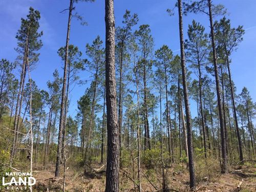 Calamus Pond Rd : Summerville : Berkeley County : South Carolina