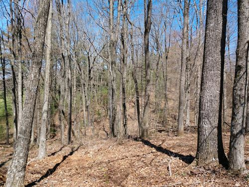 Home Site For Sale in Willis VA : Willis : Floyd County : Virginia