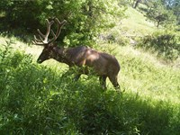 Pine Ridge Elk Ranch : Crawford : Dawes County : Nebraska