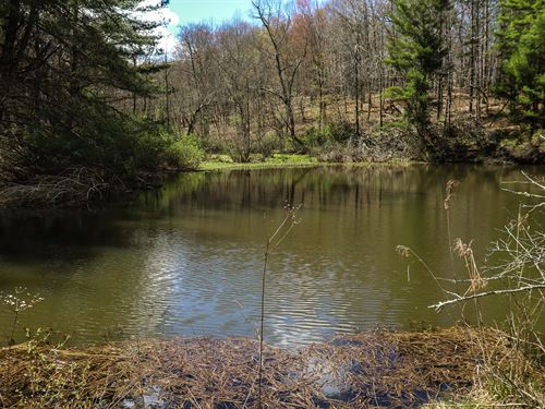 Gorgeous Hunting Property Cabin : Hillsville : Carroll County : Virginia