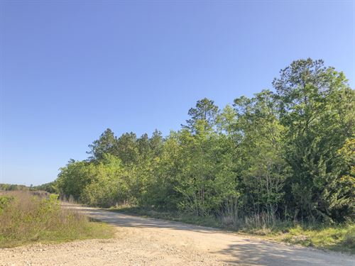 11 Acres Devers Woods : Devers : Liberty County : Texas