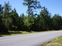 Hunting And Timber Land : Ponce De Leon : Walton County : Florida