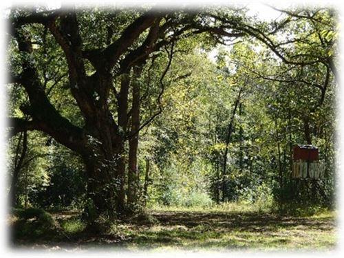 80 Acres In Oktibbeha County In Sta : Starkville : Oktibbeha County : Mississippi
